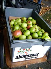 Apples in abundance trailer